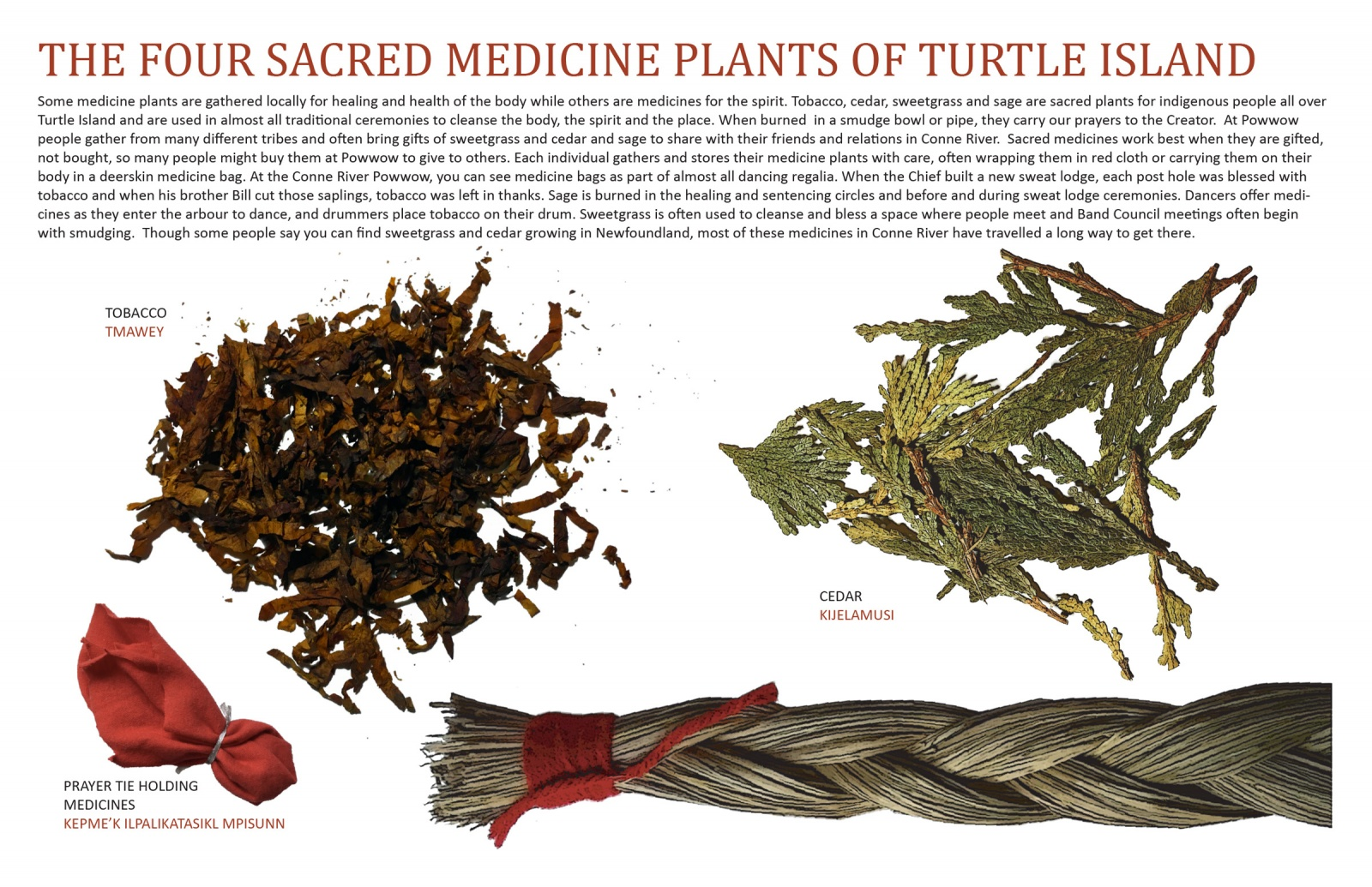The Four Sacred Medicine Plants of Turtle Island