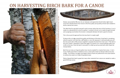 On Harvesting Birch Bark for a Canoe