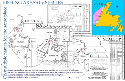 Fishing Areas by Species