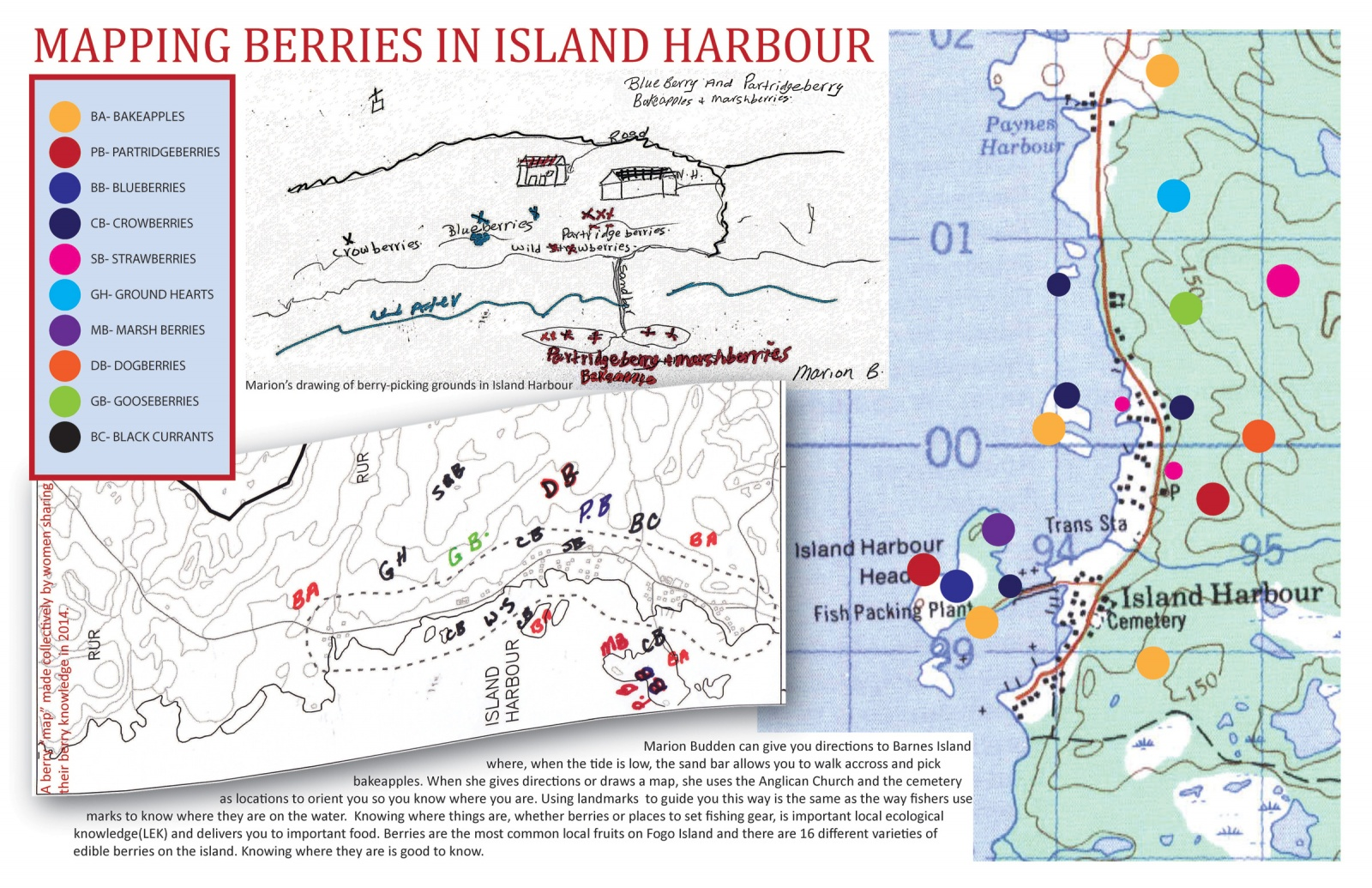 Mapping Berries in Island Harbour