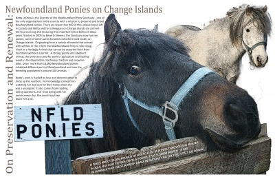 On Preservation and Renewal: Newfoundland Ponies on Change Islands