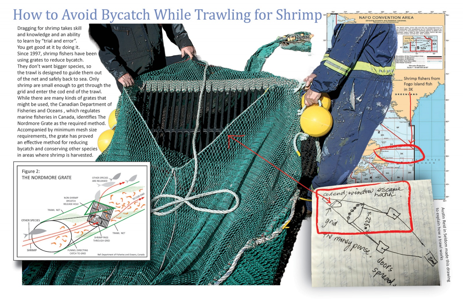 How to Avoid Bycatch While Trawling for Shrimp