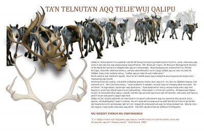 Ta'n Telnuta'n Aqq Telie'wuj Qalipu