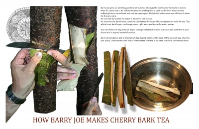 How Barry Joe Makes Cherry Bark Tea