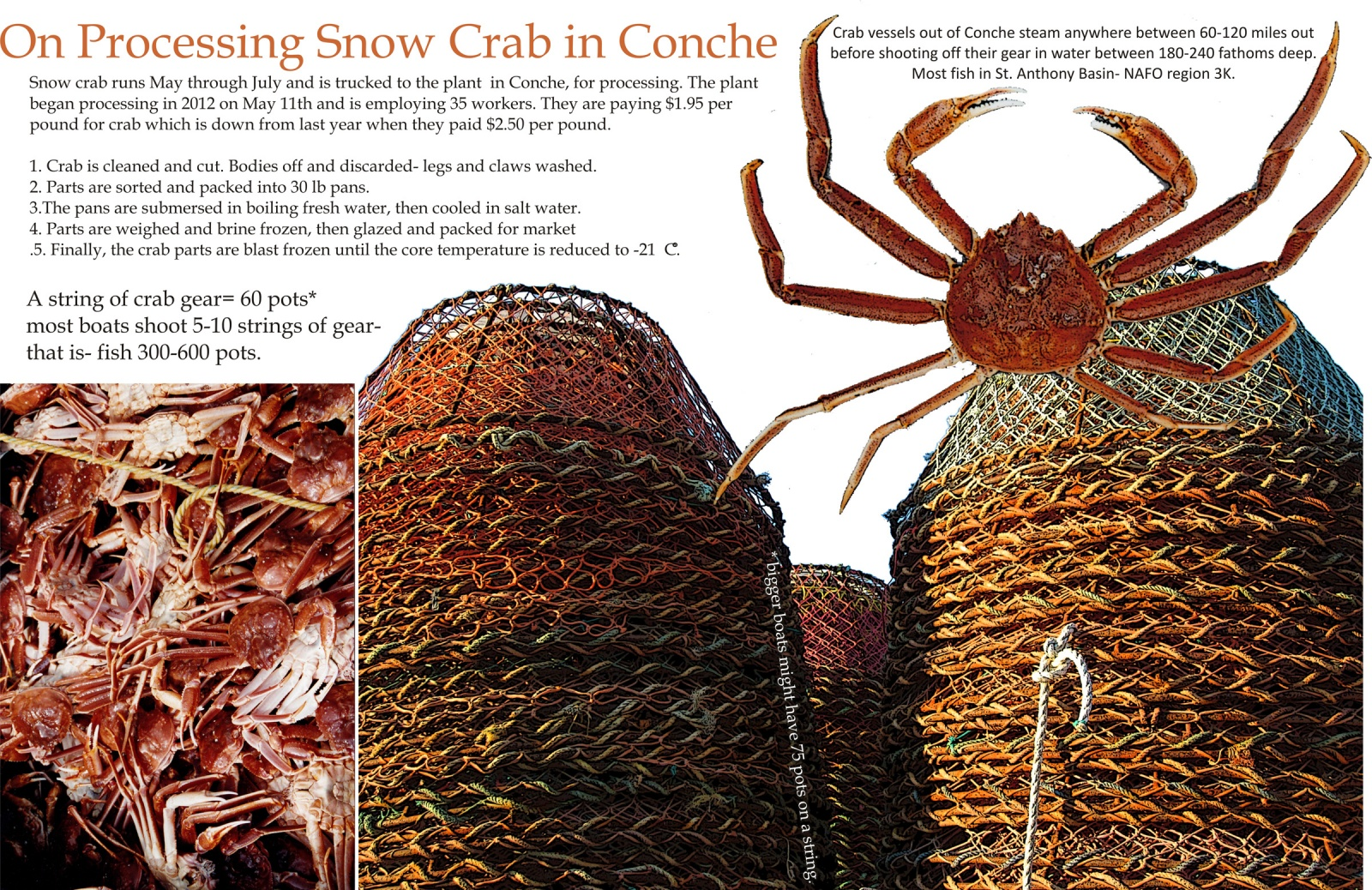 On Processing Snow Crab in Conche