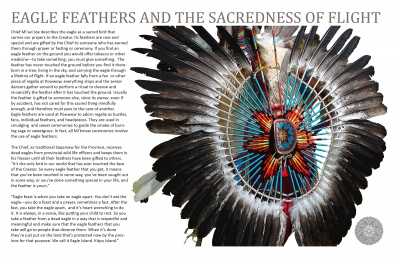 Eagle Feathers and the Sacredness of Flight