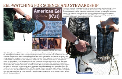 Eel-watching for Science and Stewardship