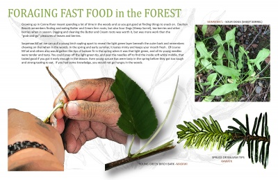 Foraging Fast Food in the Forest