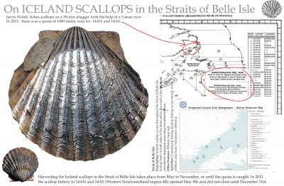 On Iceland Scallops in the Straits of Belle Isle
