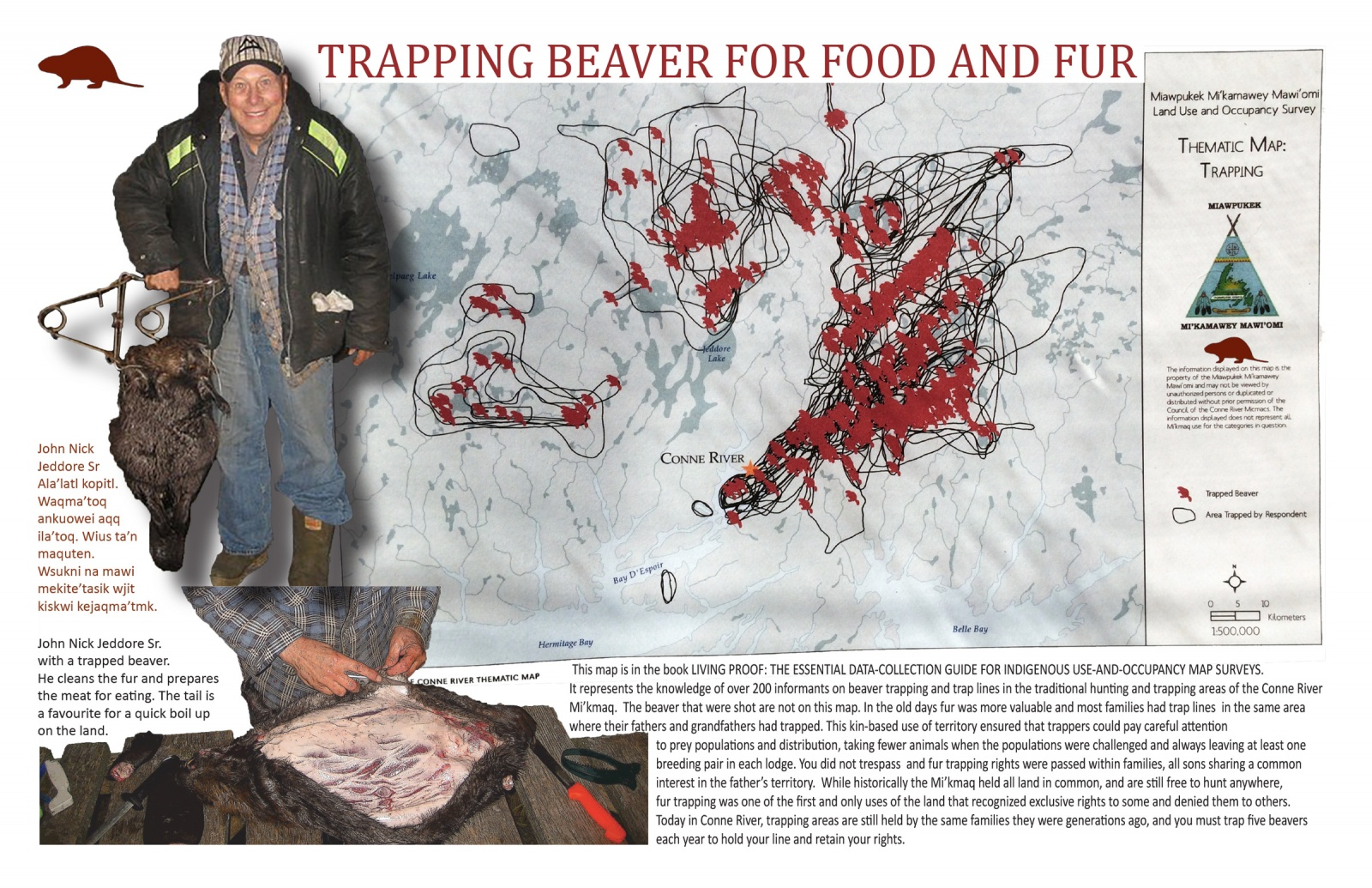 Trapping Beaver for Food and Fur