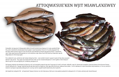 Attoqwa'sue'ken Wjit Miawla'kewey